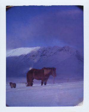 Icelandic horses in the snow in the mountains at winter in iceland - fine art polaroid photography by Guðmundur Óli Pálmason - kuggur.com